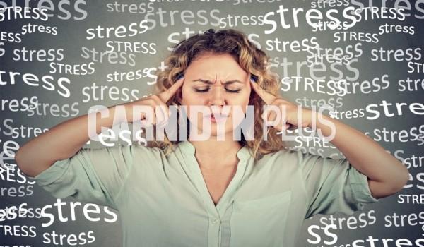 Lo stress influisce sul cervello